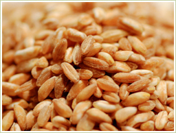 高品質の小麦胚芽を使用
