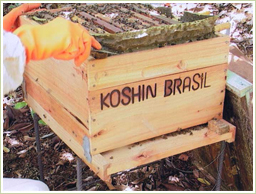 高品質のブラジル産プロポリスを使用
