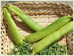 高品質の鉈豆を使用